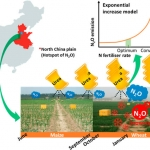 Nitrous Oxide Emissions Increase Exponentially When Optimum Nitrogen Fertilizer Rates Are Exceeded in the North China Plain